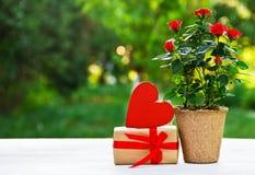 Cadeau romantique Roses au pot de fleurs, au boîte-cadeau et au coeur Jour international du ` s de femmes la fleur de jour donne  Photographie stock libre de droits