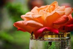 Cadeau simple - juste une rose dans un verre Photo stock