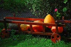 Cadeaux d'automne Image stock