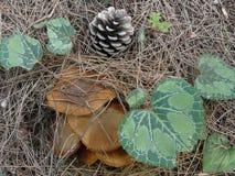 Cadeaux de forêt de nature photo libre de droits