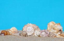 Cadeaux de la mer dans le sable image libre de droits