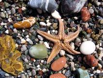 Cadeaux de mer Photo stock