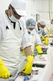 Cadeia de fabricação da limpeza dos peixes Foto de Stock Royalty Free