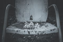 Cadeira azul do vintage com flores brancas Imagens de Stock