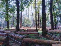 Cadeira de bambu fotos de stock