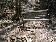 Cadeira de madeira nas madeiras Foto de Stock Royalty Free