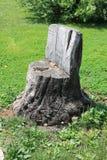 Cadeira do coto seco velho na grama verde foto de stock royalty free