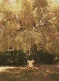 Cadeira e árvore Imagem de Stock Royalty Free