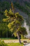 A cadeira sob o pinheiro grande e alto imagem de stock royalty free