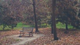 A cadeira vazia em uma floresta com completamente do amarelo sae na terra imagens de stock royalty free