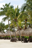 Cadeiras de praia sob palmeiras na praia tropical Fotos de Stock