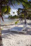 Cadeiras do coco Imagens de Stock Royalty Free