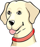 Cadela do retriever de Labrador Fotos de Stock