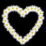 Cadena de margaritas en la forma de un corazón Foto de archivo libre de regalías