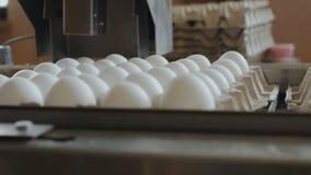 Cadena de producción industrial de la granja de los huevos almacen de metraje de vídeo