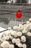 Cadenas rouge sous forme de coeur Images stock