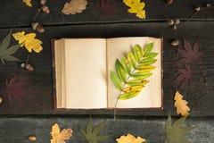 Caderno aberto do vintage com as folhas de outono coloridas sobre o fundo de madeira Do outono vida ainda Fotos de Stock