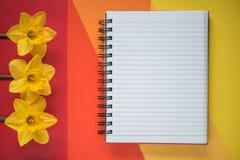 Caderno aberto vazio com os narcisos amarelos amarelos no fundo Configuração do plano da vista superior imagem de stock royalty free