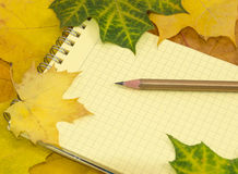 Caderno e lápis nas folhas de bordo coloridas Foto de Stock