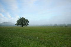 cades δέντρο ομίχλης όρμων Στοκ Εικόνα