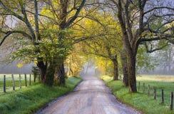 Cades小海湾大雾山国家公园风景风景春天 免版税库存图片