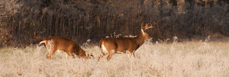 Cades Buck Stock Image
