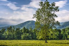 Cades Cove Stock Photo