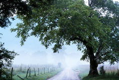 Cades Cove fog over Sparks Lane. Royalty Free Stock Images