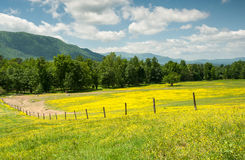 Cades Cove Great Smoky Mountains National Park Tennessee Royalty Free Stock Photo