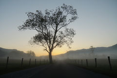 Cades Cove lane and tree Stock Images