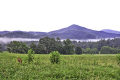 Cades Cove Mountains with Deer. As the sun rises in East Tennessee, the fog lies low in the foothills, and a dear obliviously grazes in the foreground Royalty Free Stock Photography