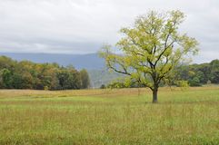 Cades Cove Stock Images