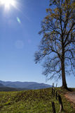 Cades Cove Simple Tree Landscape Royalty Free Stock Image