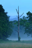 Cades Cove Twilight. Twilight in Cades Cove.Great Smoky Mountains National Park royalty free stock image