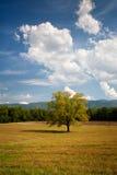 cades zatoczki pola krajobrazu osamotniony dębowy drzewo obraz stock