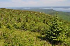 Cadillac-Berg im Acadia-Nationalpark, Maine Stockfotos