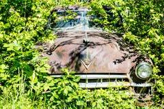 Cadillac in het Onkruid Stock Foto's