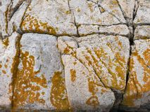 Cadillac Mountain Granite with Yellow Lichen Royalty Free Stock Images