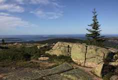 Cadillac Mountain Spruce Royalty Free Stock Photos