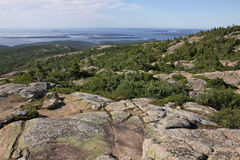 Cadillac Mountain Vegetation Stock Photo