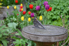 Cadran solaire dans le jardin de tulipe Photo stock