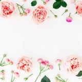 Cadre élégant de frontière fait de roses, bourgeons et pétales roses sur le fond blanc Configuration florale Configuration plate, Photo stock