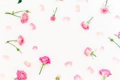 Cadre élégant fait de roses et pétales roses sur le fond blanc Configuration florale Configuration plate, vue supérieure Photographie stock