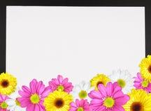 Cadre 2 de marguerite Photographie stock libre de droits