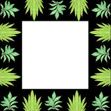 Cadre 7. Two kinds of foliage background, white and black Stock Image
