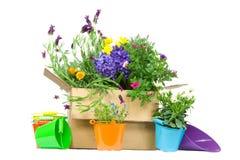 Cadre avec les fleurs fraîches pour le commerce électronique Photo libre de droits