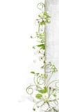 Cadre blanc avec des fleurs de cerise Photo stock