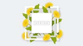 Cadre blanc avec la fleur jaune de pissenlit et la feuille verte Photographie stock libre de droits