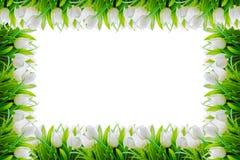 Cadre blanc de frontière de fleur de tulipes Photographie stock