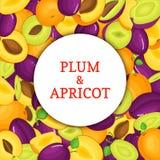 Cadre blanc rond sur le fond mûr de prune de pomme Illustration de carte de vecteur Les pommes fraîches et juteuses Delicious de  Photographie stock